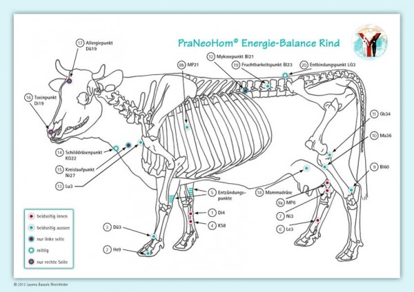 Bassols Rheinfelder, L: Akupunktur-Tafel Rind/Kuh